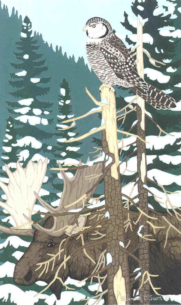 Hawk Owl and Moose painting