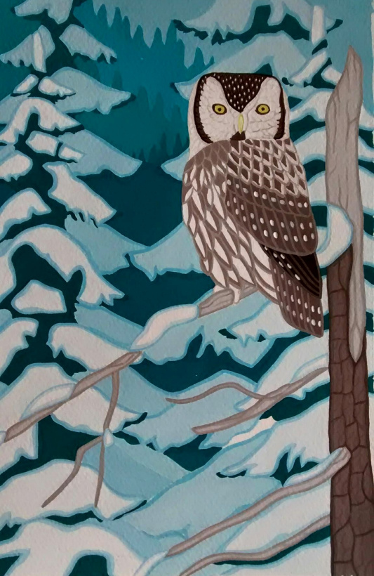Boreal Owl painting