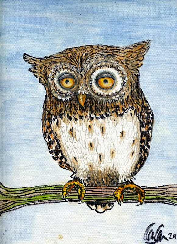 painting of a Little Owl