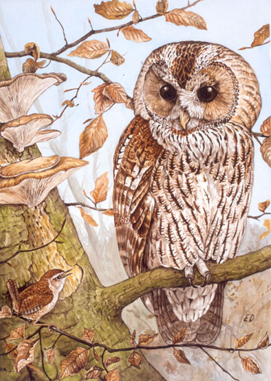 Tawny Owl and wrenpainting
