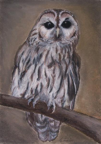 painting of a Tawny Owl