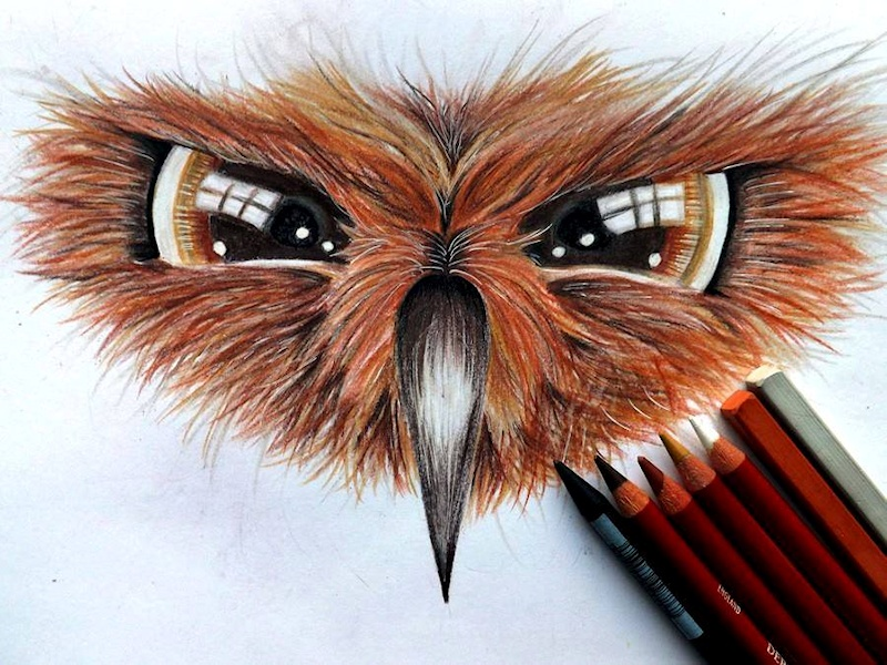 Owl Face drawing