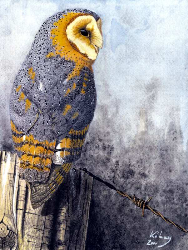 painting of Barn owl
