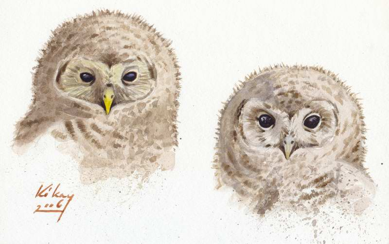 painting of Ural owl and tawny owl chicks