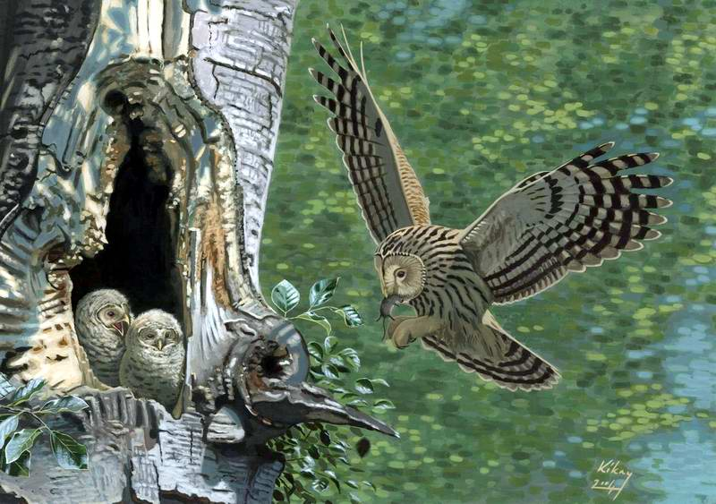 painting of Ural owls at nest