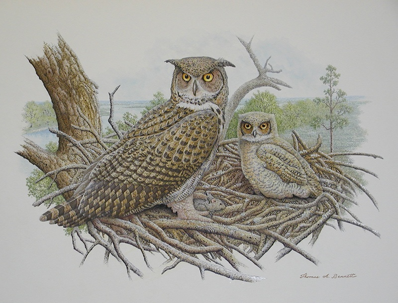 painting of Great Horned Owls at nest