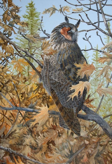 painting of a Long-eared Owl