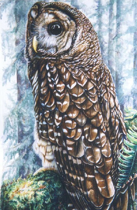 Northern Spotted Owl painting