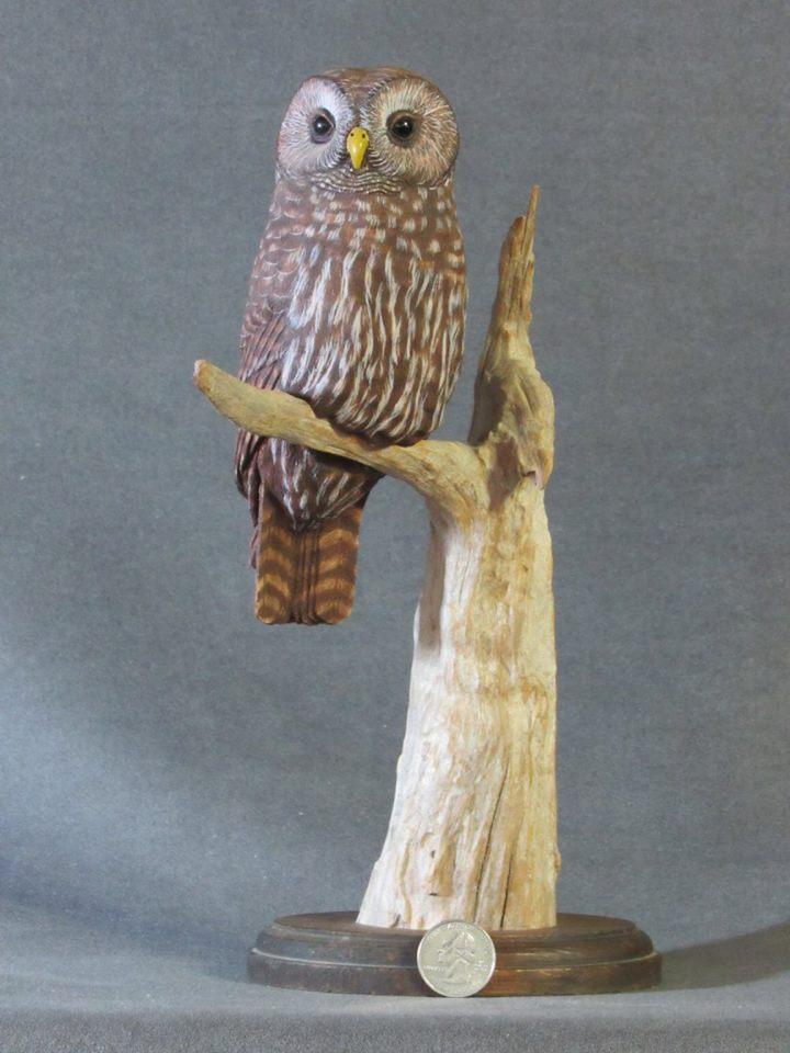 Barred Owl Carving