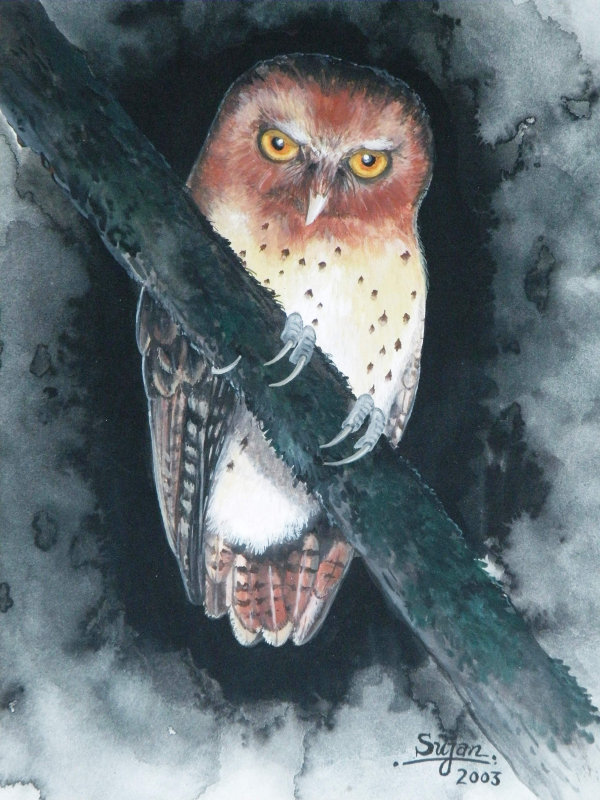 painting of a Serendib Scops Owl