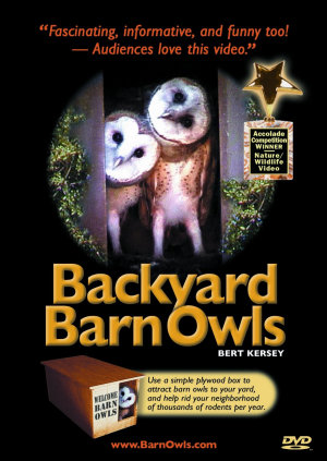 Backyard Barn Owls