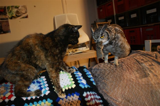The Caring Owl feeds the cat