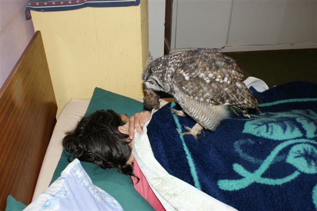 The Caring Owl