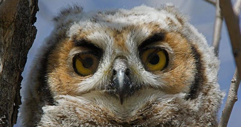 Owl Eye Anatomy
