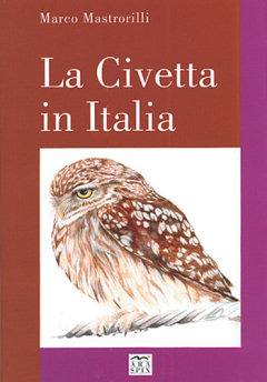 Little Owls in Italy