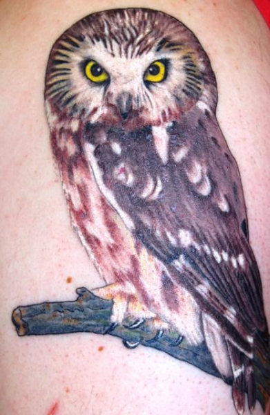 Saw-whet Owl tattoo