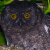 Grand Comoro Scops Owl