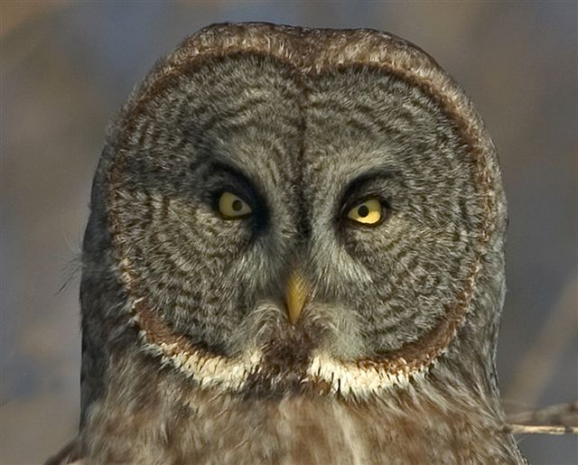 grey owl essays